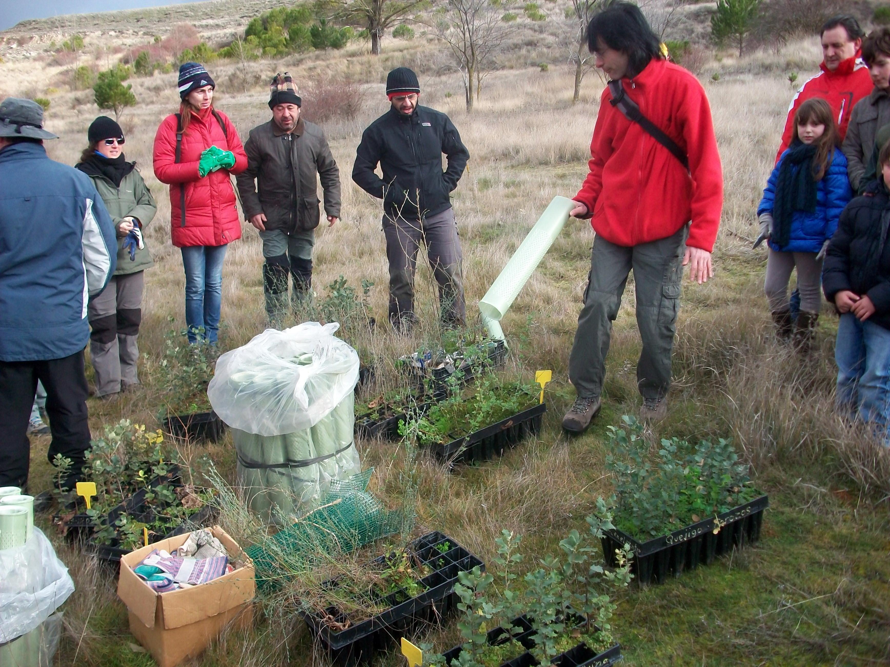 Jornadas de trabajo altruista plantando arboles y arbustos for Viveros en palencia